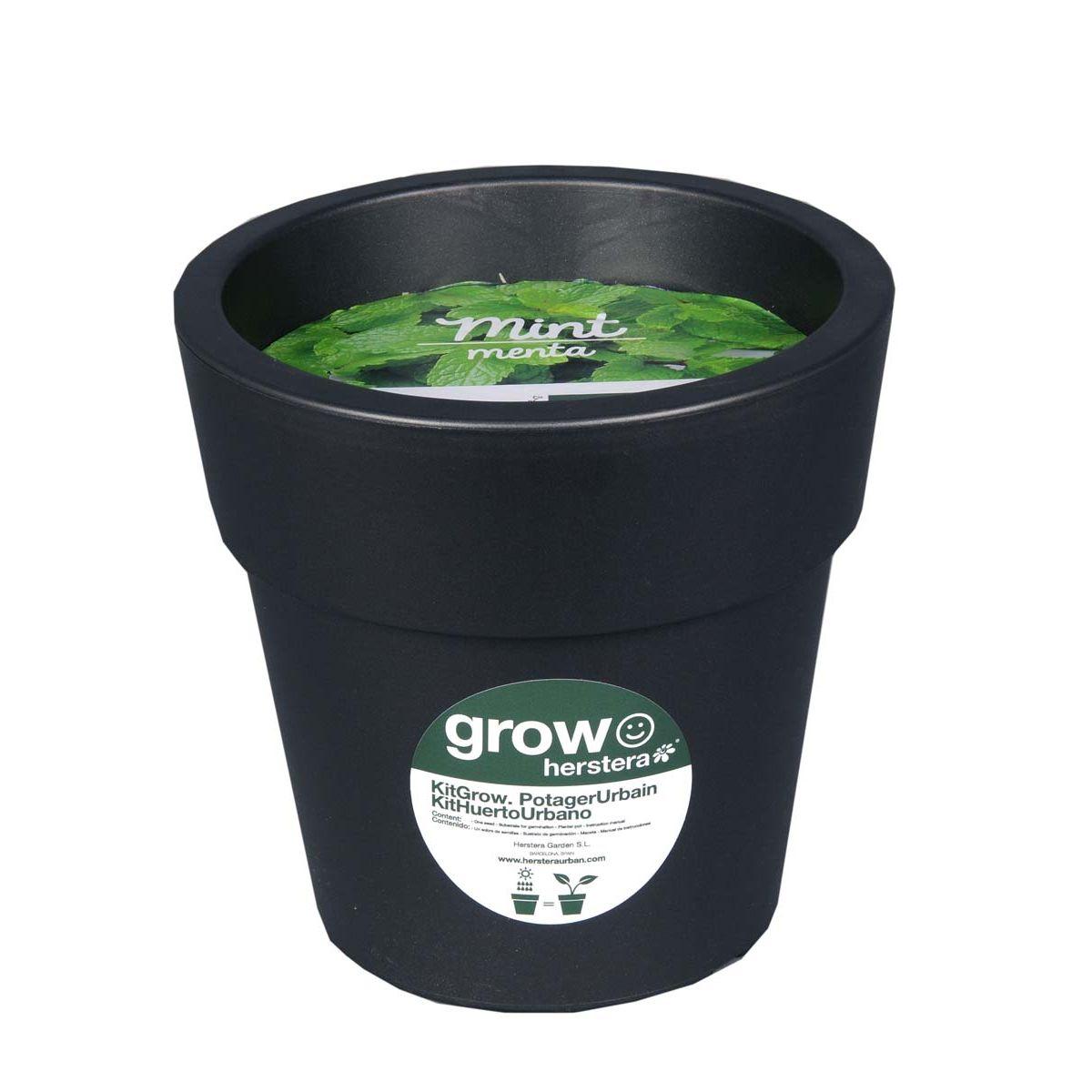 Kit menthe à faire pousser en pot 24 cm anthracite