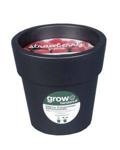 Kit fraises à faire pousser en pot 24 cm anthracite
