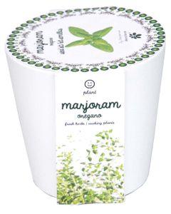 Origan à faire pousser en pot 12 cm céramique blanc